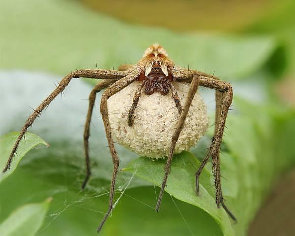 Lug und Trug bei der Spinnenhochzeit